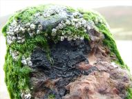 Stump of a wooden post, with embedded iron thought to be shrapnel, belonging to an unidentified structure on Rhossili beach