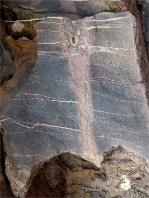 Detail of Carboniferous Limestone at Pwll Du Bay