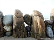 Wooden posts of a beach groyne, worn down to stumps, with trapped pebbles.