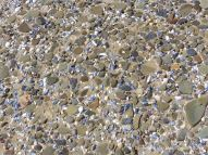 Pebbles and seashells on the beach near Whiteford Point