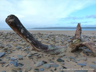 Driftwood with pebbles on the beach