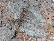Triassic to Jurassic Blomidon Formation rocks at Wasson Bluff