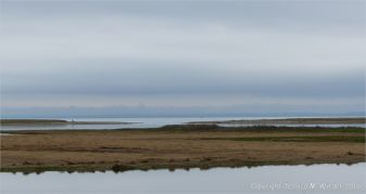 Coastal view of flat tidal water and salt marsh