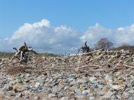 Driftwood -topped pebble bank that forms the beach at Crystal Cliffs