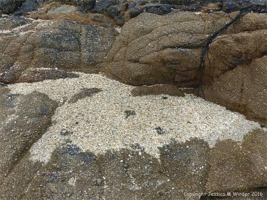 Rocky outcrop with a hollow filled by coarse shell sand on Herm