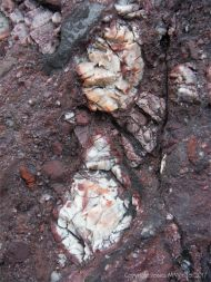 Close-up of the Devonian conglomerate at Trabeg on the Dingle Peninsula