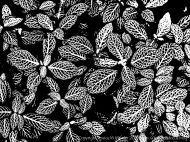 Art inspired by nature - leaf patterns