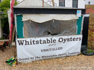 Kiosk selling Whitstable oysters on the beach