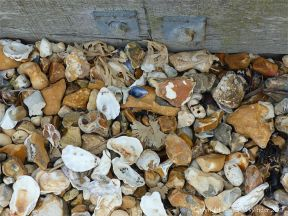 Empty seashells on flints and pebbles against a wooden breakwater at the beach