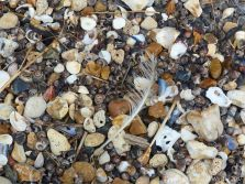 Seashells and shingle on the beach
