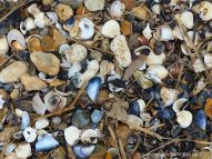 Seashells, flints, and pebbles on the seashore