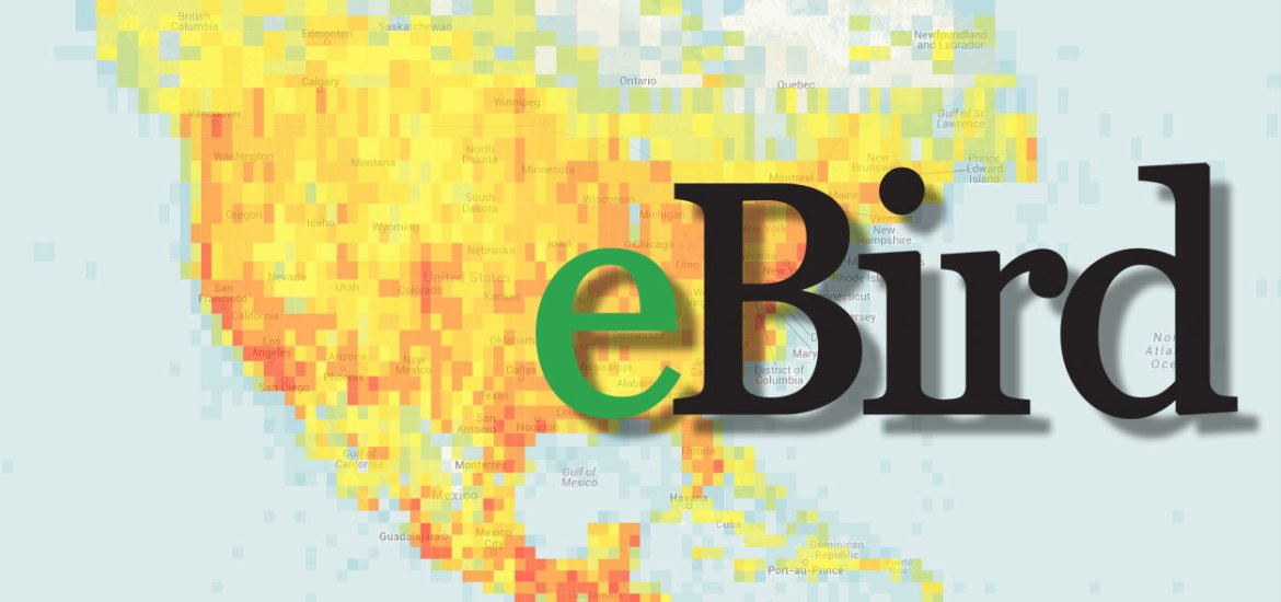 Five Ways to Use eBird to See More Birds – Nature in Novato