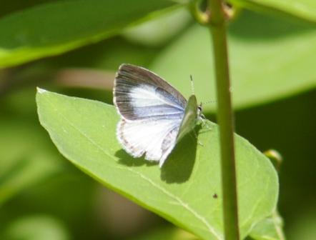 Spring azure 2b