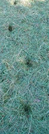 Deer tracks grass b