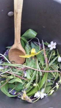 Spring wild Edible Salad