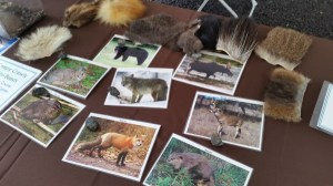 Wild about Wildlife Hands-on Display Game