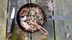 Bushcraft Wild Foraged Meal