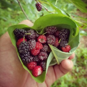 Tulip leaf cup of rasberries, mullberries and some mock strawberry.