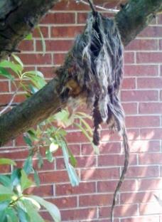 Squirrel Carcass