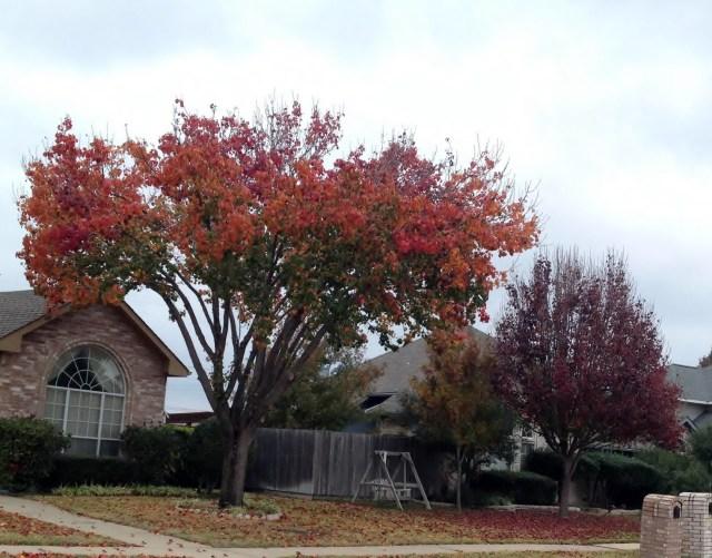 neighborhood fall trees