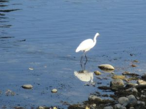 egret-reflection