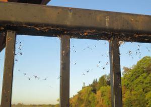flies-on-rail