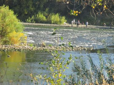 river1, American River, Fair Oaks, salmon, ducks, fisherman, nature,beauty