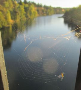 spiderweb-2w-spider, Fair Oaks Bridge, American River, water, morning