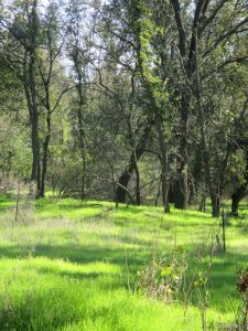 green grass, American River Parkway, jedediah Smith Memorial Trail, bike trail, cyclist, bike path, trees, oak woodland