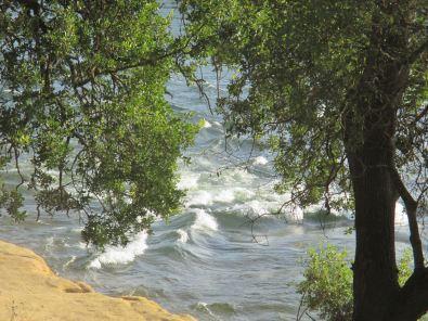 waterfowl, American River, San Juan Rapids, American River Parkway, Memorial Day, rafters,