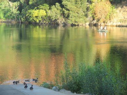 American River, fishing, Fair Oaks Bridge, ducks, morning