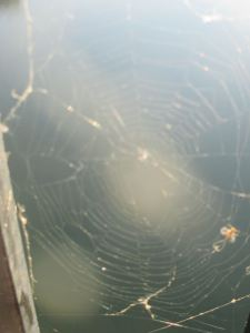 spider, spider web, Fair Oaks Bridge, American River, water, morning, write, nature