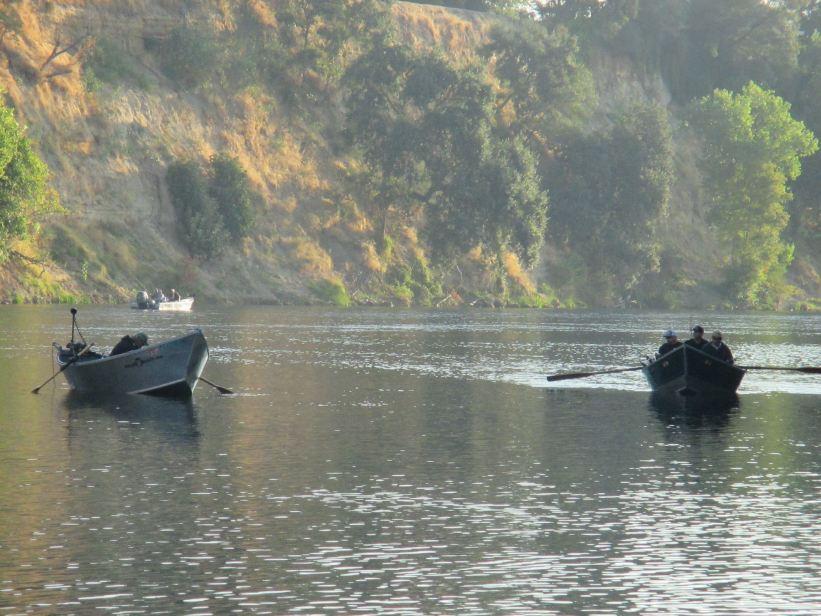 boats, fishermen, Fair Oaks Bridge, morning, American River, salmon