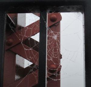 spider web, Fair Oaks Bridge, American River,fog