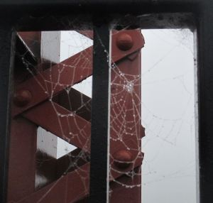 spider web, Fair Oaks Bridge, American River,fog