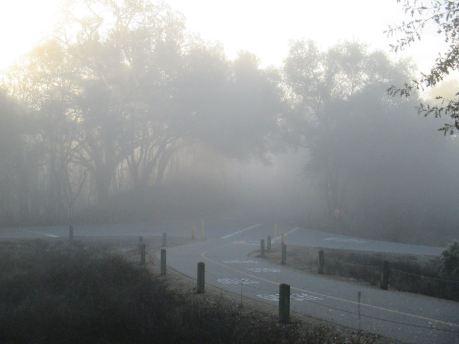 Fair Oaks Bridge, dense fog, American River Parkway, American River, mornings,