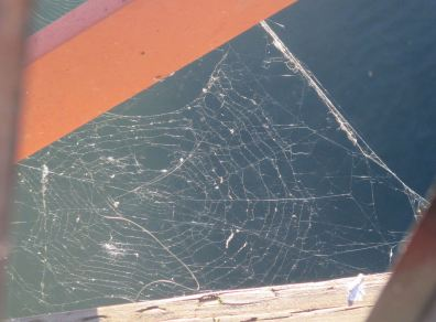 spider webs, geometry, Fair Oaks Bridge, American River, water, weave, nature, writing,