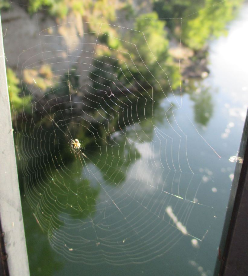 spider webs, mornings, Fair Oaks Bridge, American River, mornings, geometry