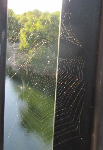 spider webs, mornings, Fair Oaks, webs, spider, greetings, Fair Oaks Bridge, Fair Oaks Bluffs, American River, water, spider