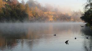misty morning, mist, mornings, Fair Oaks Bridge, American River, wildlife, nature, writing, Fair Oaks Bridge, American River, outdoor, peaceful, quiet,