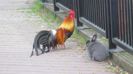 rabbit, bunny Fair Oaks Bridge, mornings, breakfast