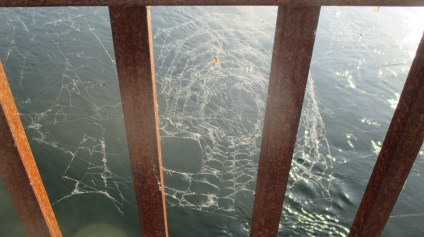 spider webs, Fair Oaks Bridge, morning, Jims Bridge, nature, outdoors, walks, beauty, scenic