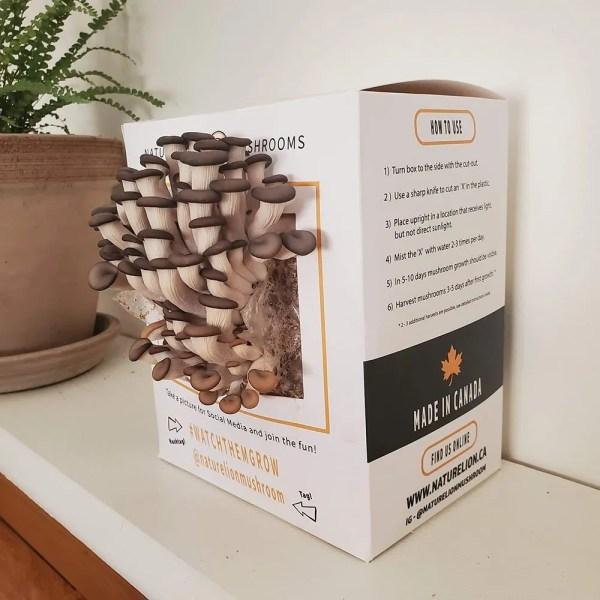Wholesale Mushroom Grow Kits