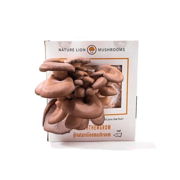 Harvest oyster mushrooms.
