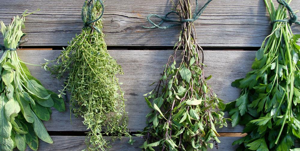 plantes pour soigner les maux de grossesse
