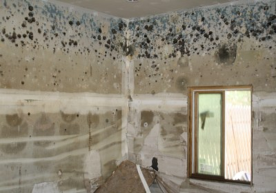 What's the Difference Between Mold and Mildew?