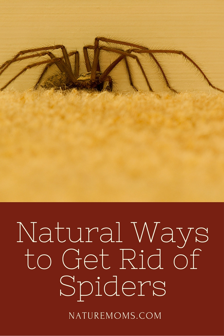 How to get rid of spiders in your bedroom for How to get rid of spiders in house