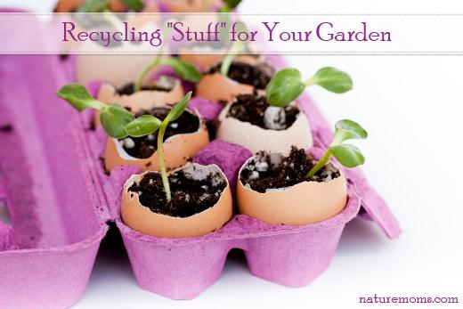 Green seedlings growing out of soil in egg shells