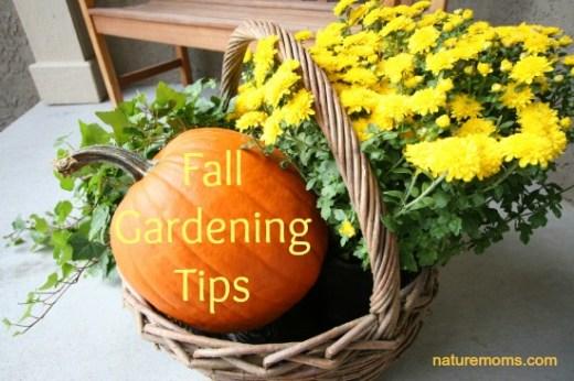 fall-gardening-tips