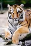 Exotic Animals Escape in Ohio